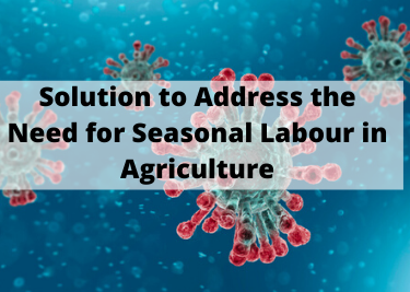 Solution to Address the Need for Seasonal Labour in Agriculture